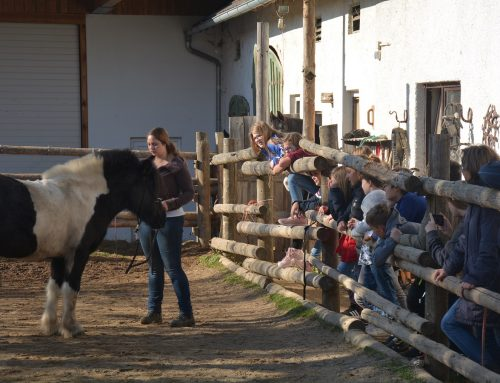 Abenteuer mit dem Pferd – 6b